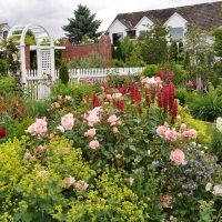 An inviting arched gate to roses and perennials